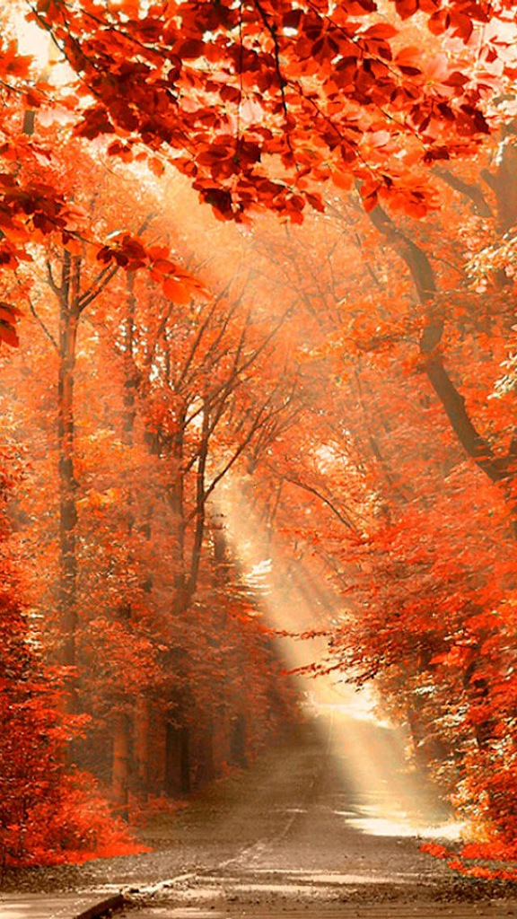 Beautiful autumn wallpapers1