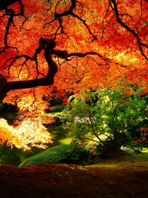 Beautiful autumn wallpapers11