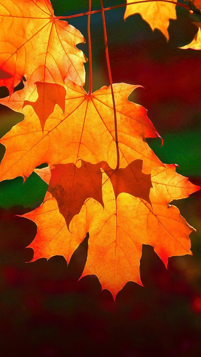 Beautiful autumn wallpapers12