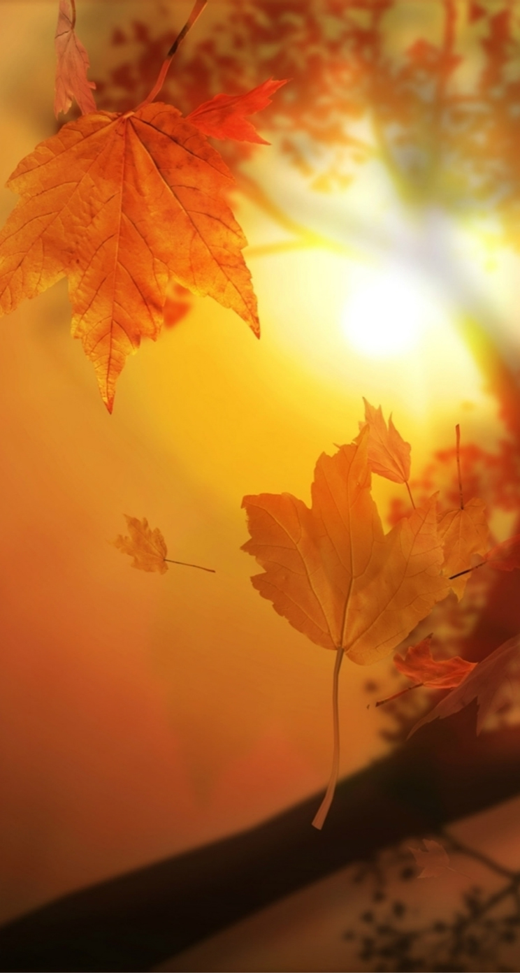 Beautiful autumn wallpapers16