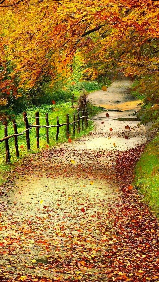 Beautiful autumn wallpapers17