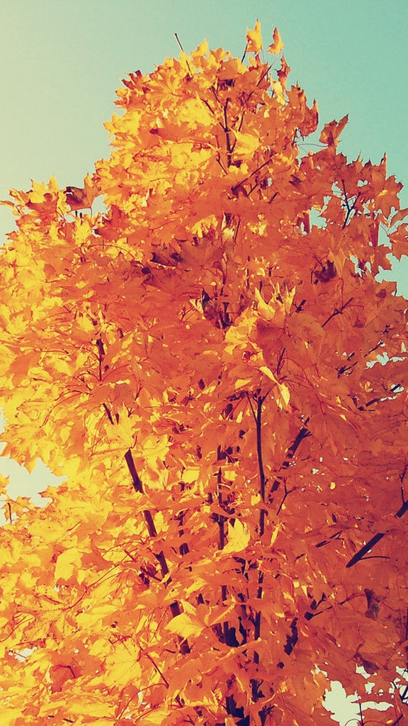 Beautiful autumn wallpapers19