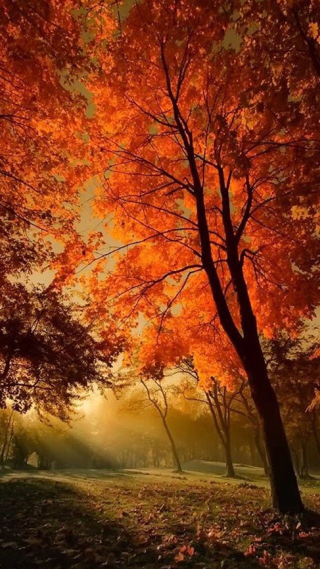 Beautiful autumn wallpapers21