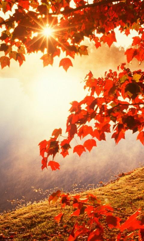 Beautiful autumn wallpapers22
