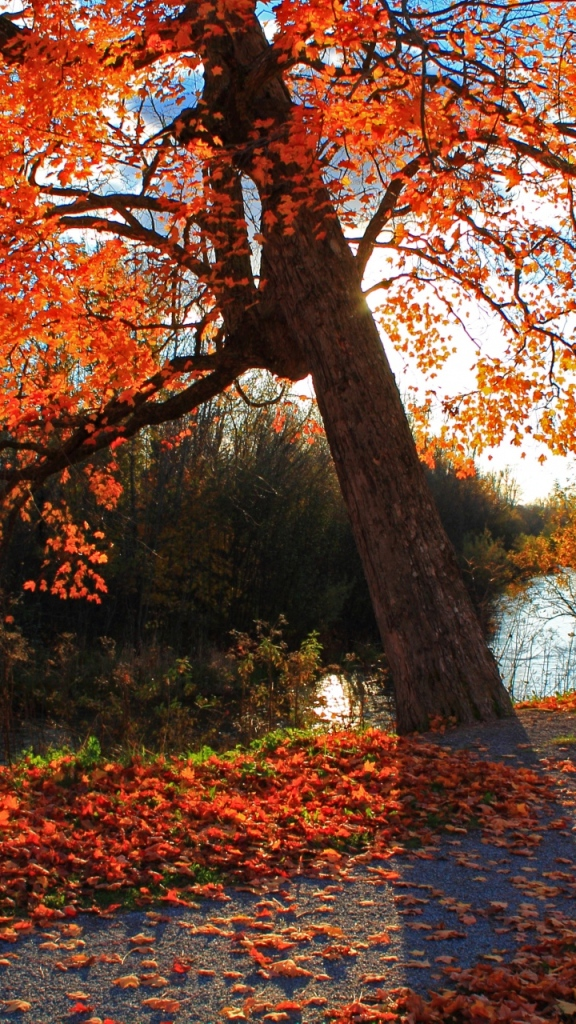 Beautiful autumn wallpapers28