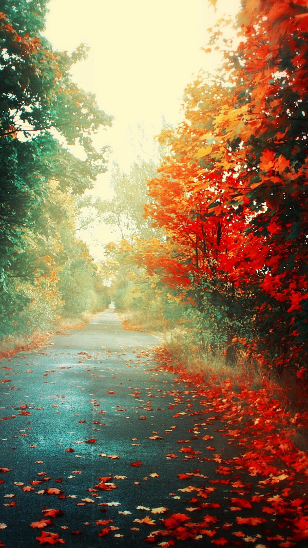 Beautiful autumn wallpapers29