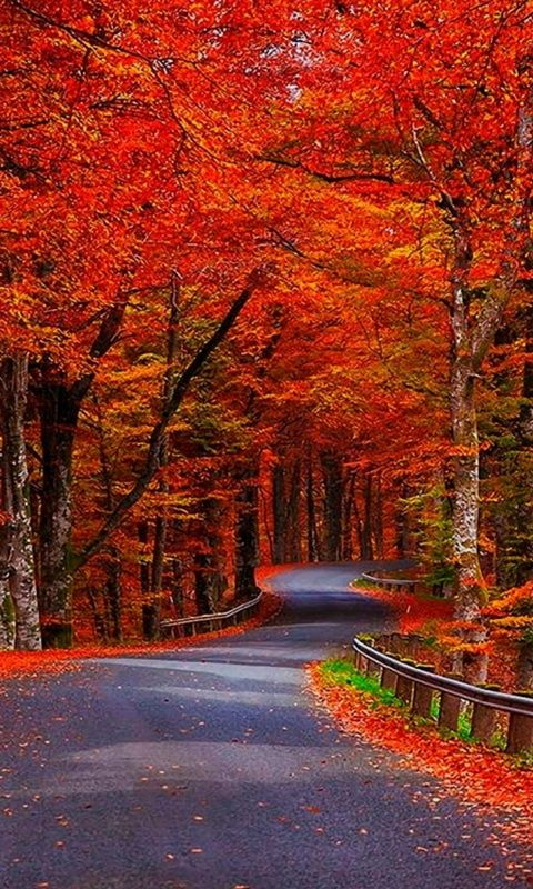 Beautiful autumn wallpapers30