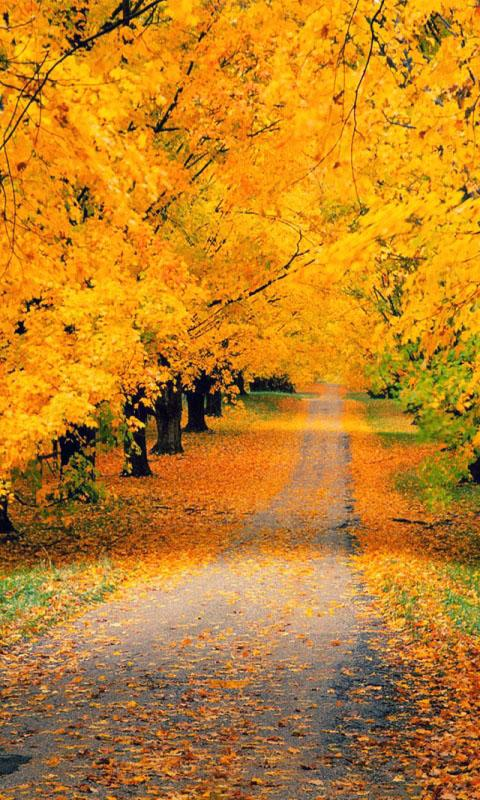 Beautiful autumn wallpapers7