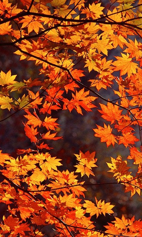 Beautiful autumn wallpapers9