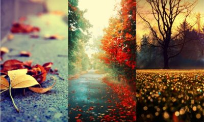 31 Beautiful Autumn Wallpapers
