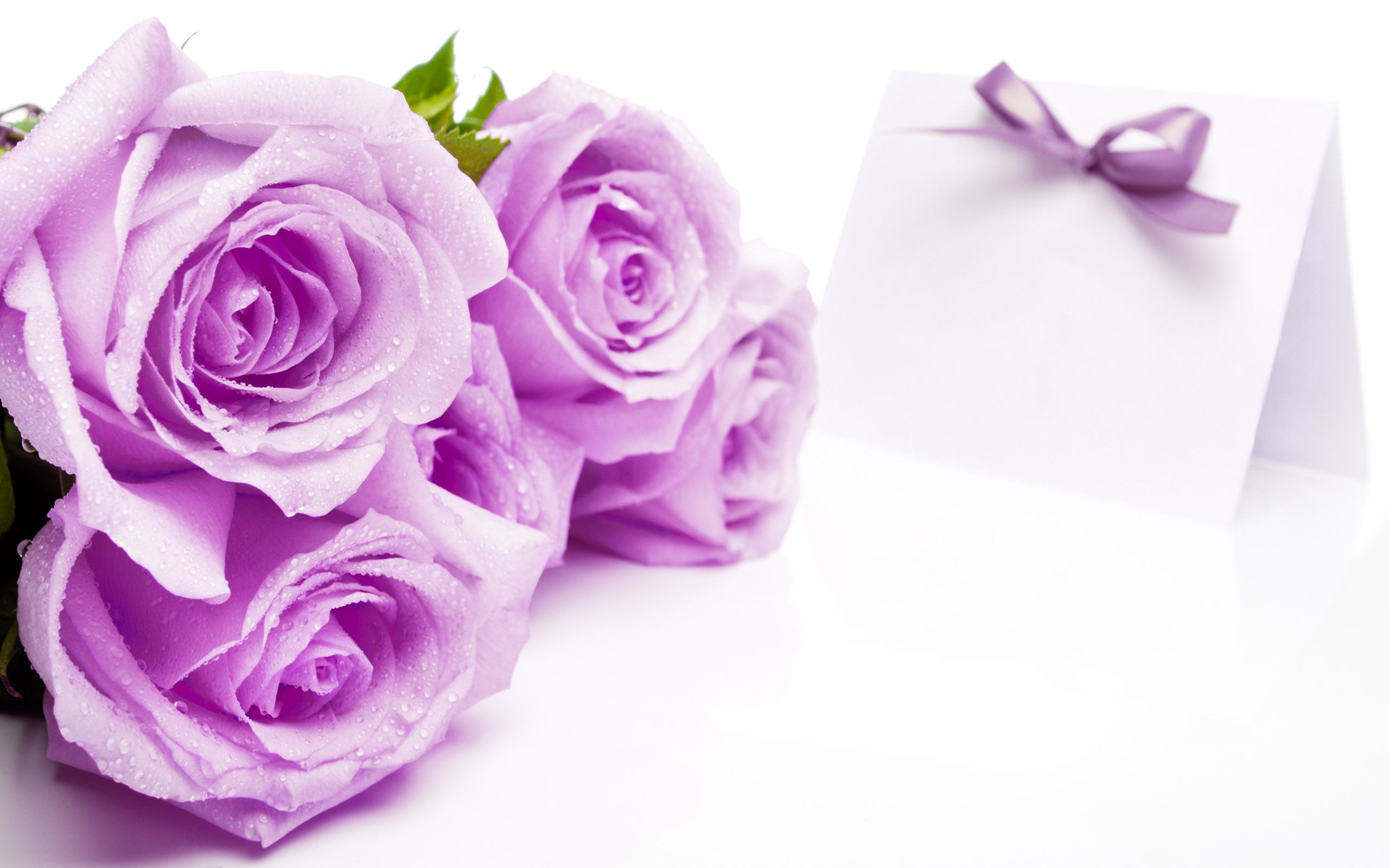 Beautiful rose images and wallpapers 14