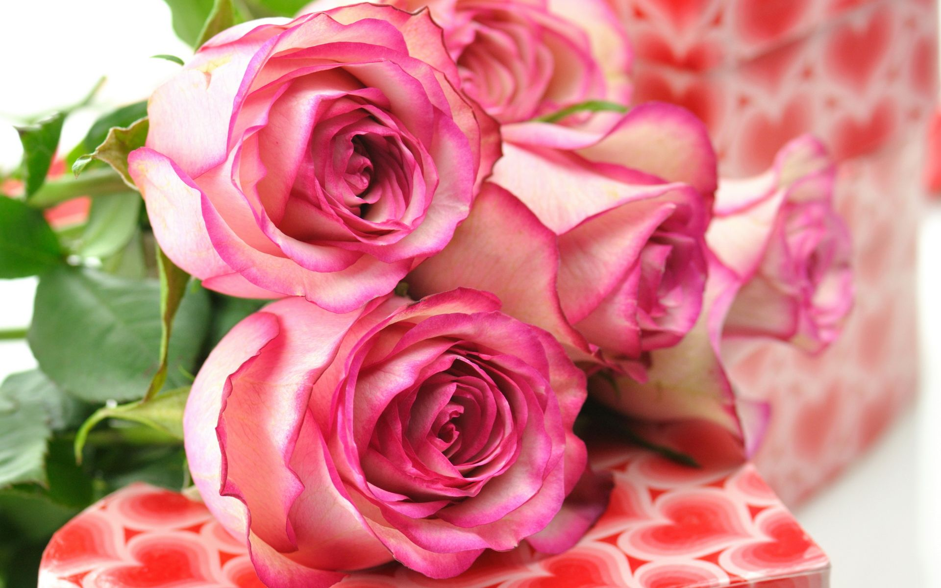 Beautiful rose images and wallpapers 4