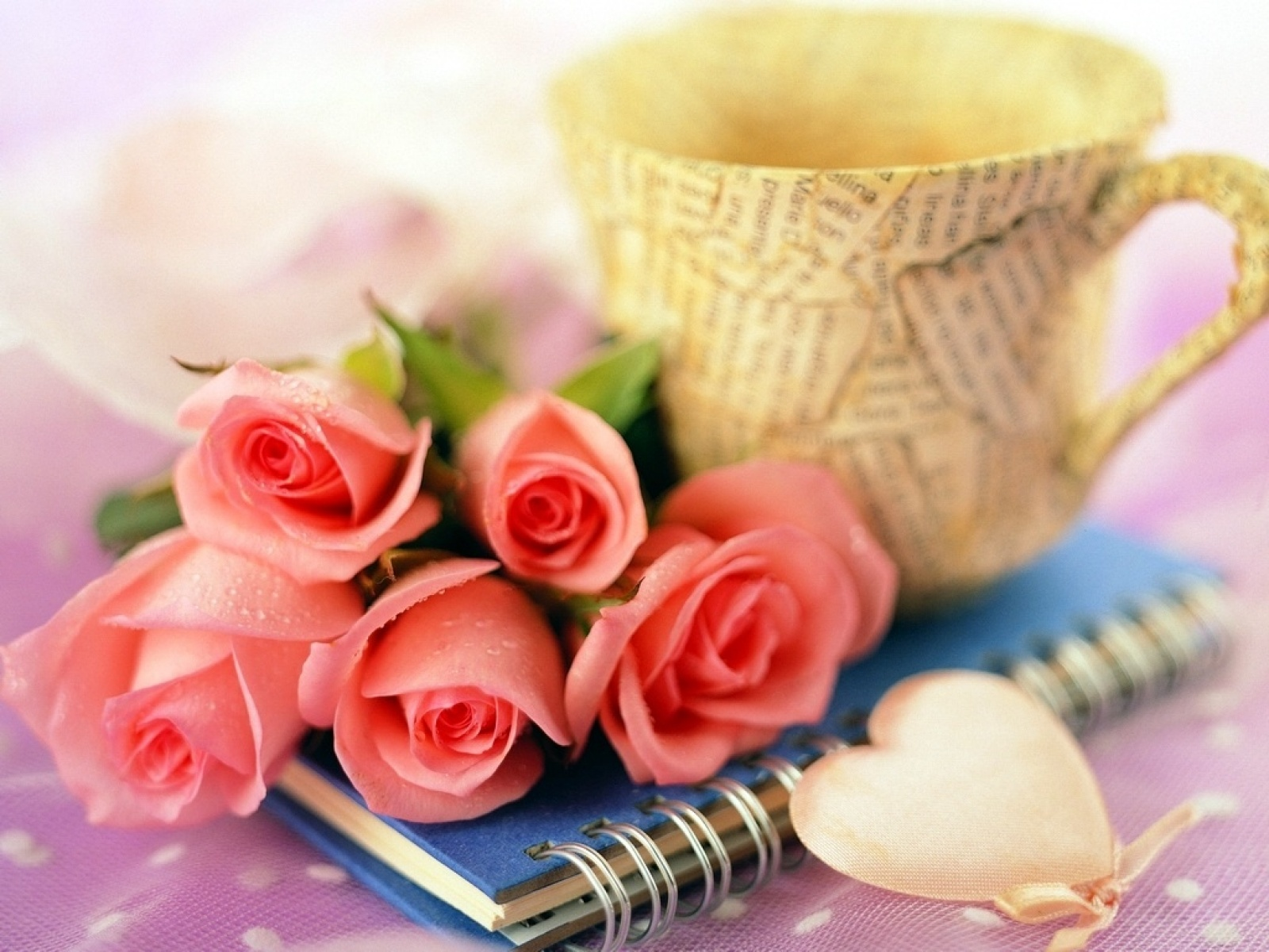 Beautiful rose images and wallpapers 7
