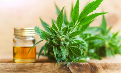 Fashion's New Trend: Cbd Oil- What to Know?