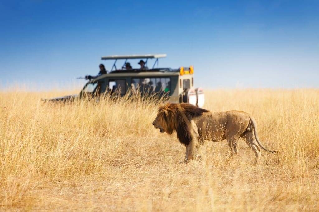 It presents the chance for a raw safari experience